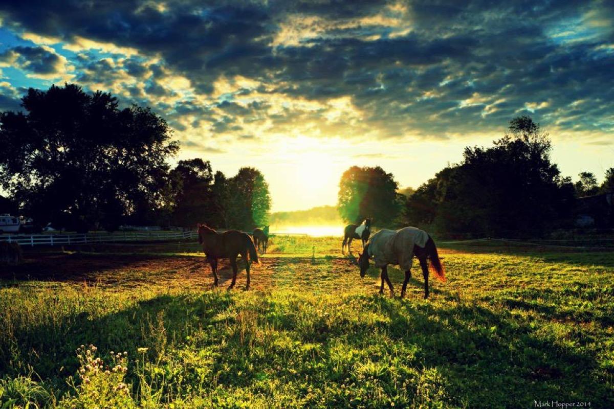 Sunset Horses Bay of Quinte Mark Hopper