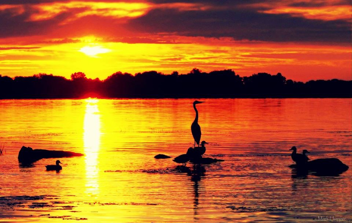 Heron on the Bay of Quinte Mark Hopper
