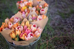 Meet the growers with a trip to Dahlia May Flower Farm in the Bay of Quinte
