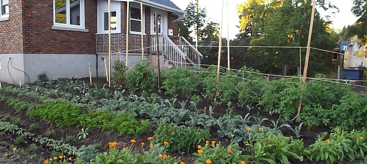 Meet the growers with urban agriculture from Green Wheel Farms in the Bay of Quinte