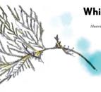 White Cedar Mohawks of the Bay of Quinte