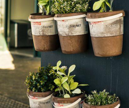 Carson Arthur How To Grow Window Sill Herbs