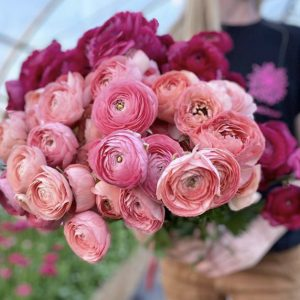 A person holding a bunch of ranunculus flowers.