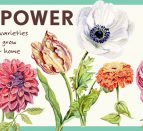 A white background with green border. Seven illustrated flowers, with text: Petal Power, 7 varieties to grow at home.