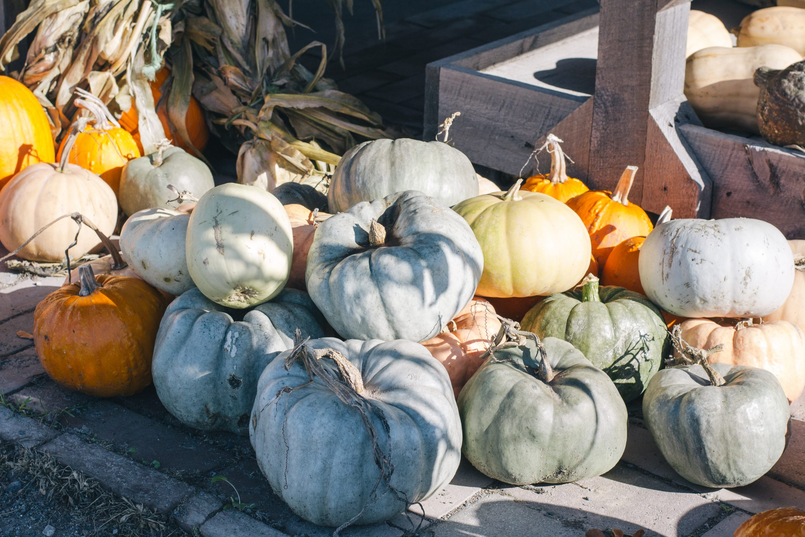 Piles of squash and gourds at Willow Creek Farms farm stand in Quinte West.