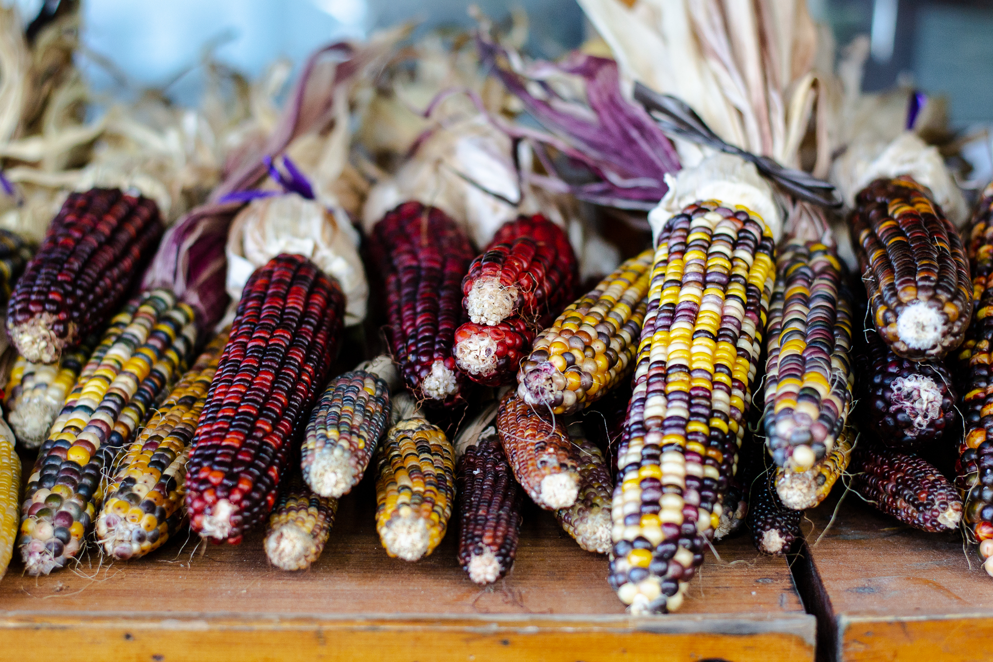 Piles of multi-coloured corn on a wooden shelf at Cheer Farms.
