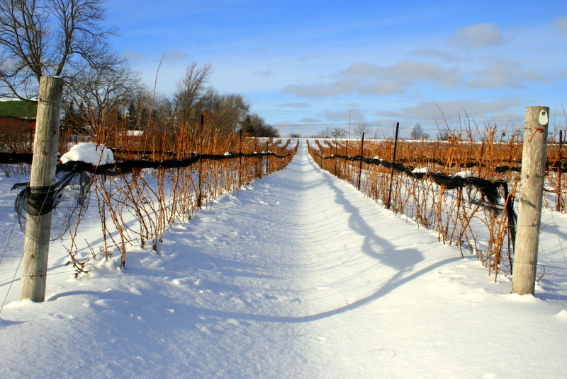 Prince Edward County The Fastest Growing Wine Region In The World Bay Of Quinte Tourism