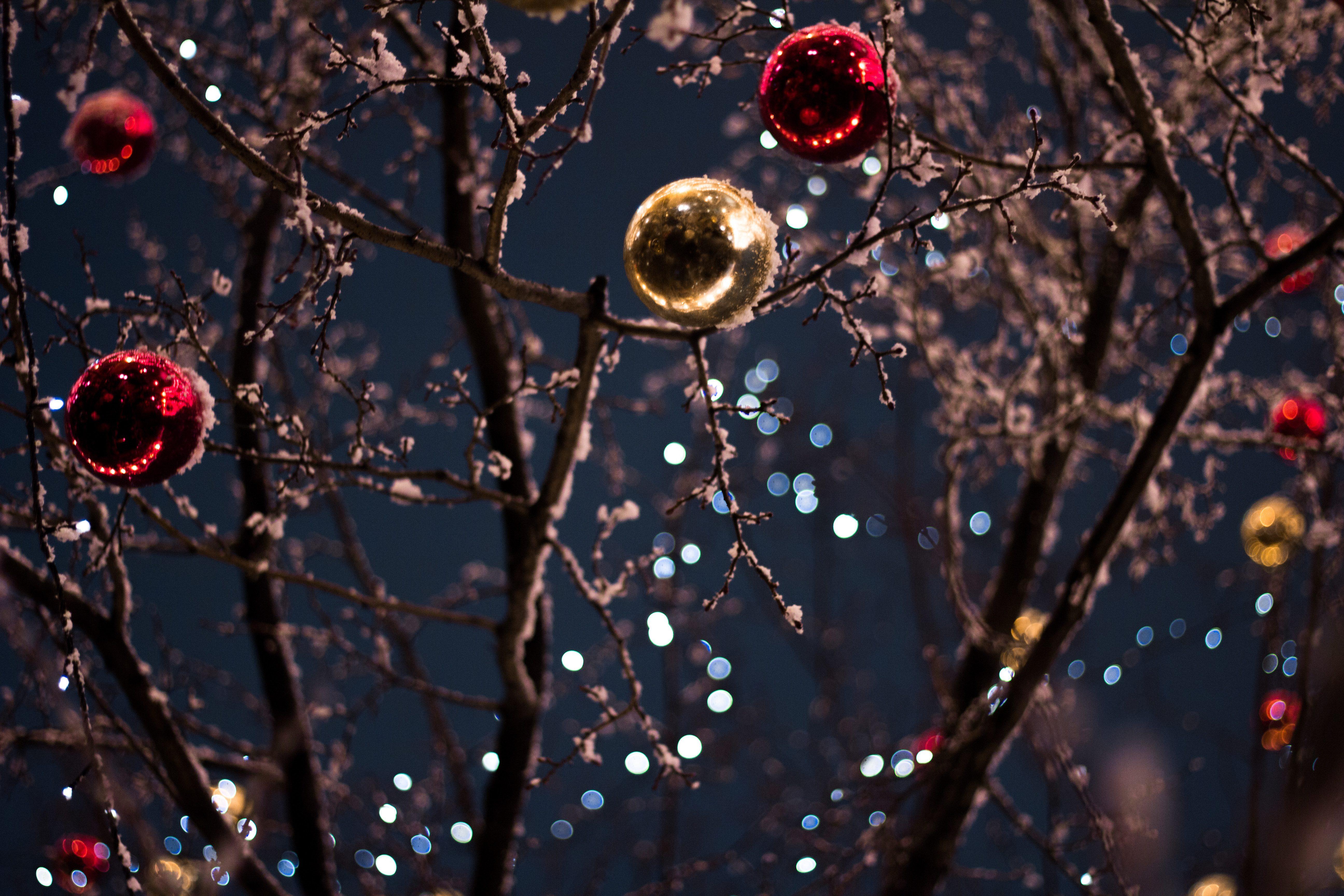 christmas lights jane forrester park belleville