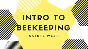 intro to beekeeping quinte west