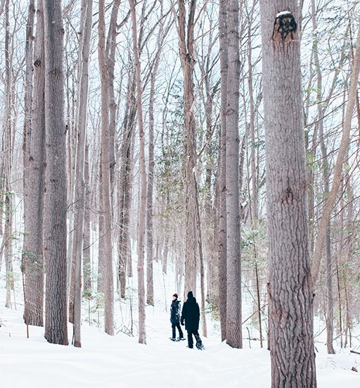 Two people snowshoeing between tall trees on the trails at Batawa Ski Hill.