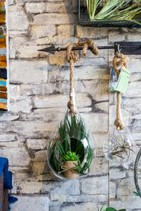 Wall display with hanging plant at Wish Home Accents.