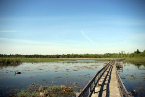 Wetland boardwalk at the HR Frink Centre.