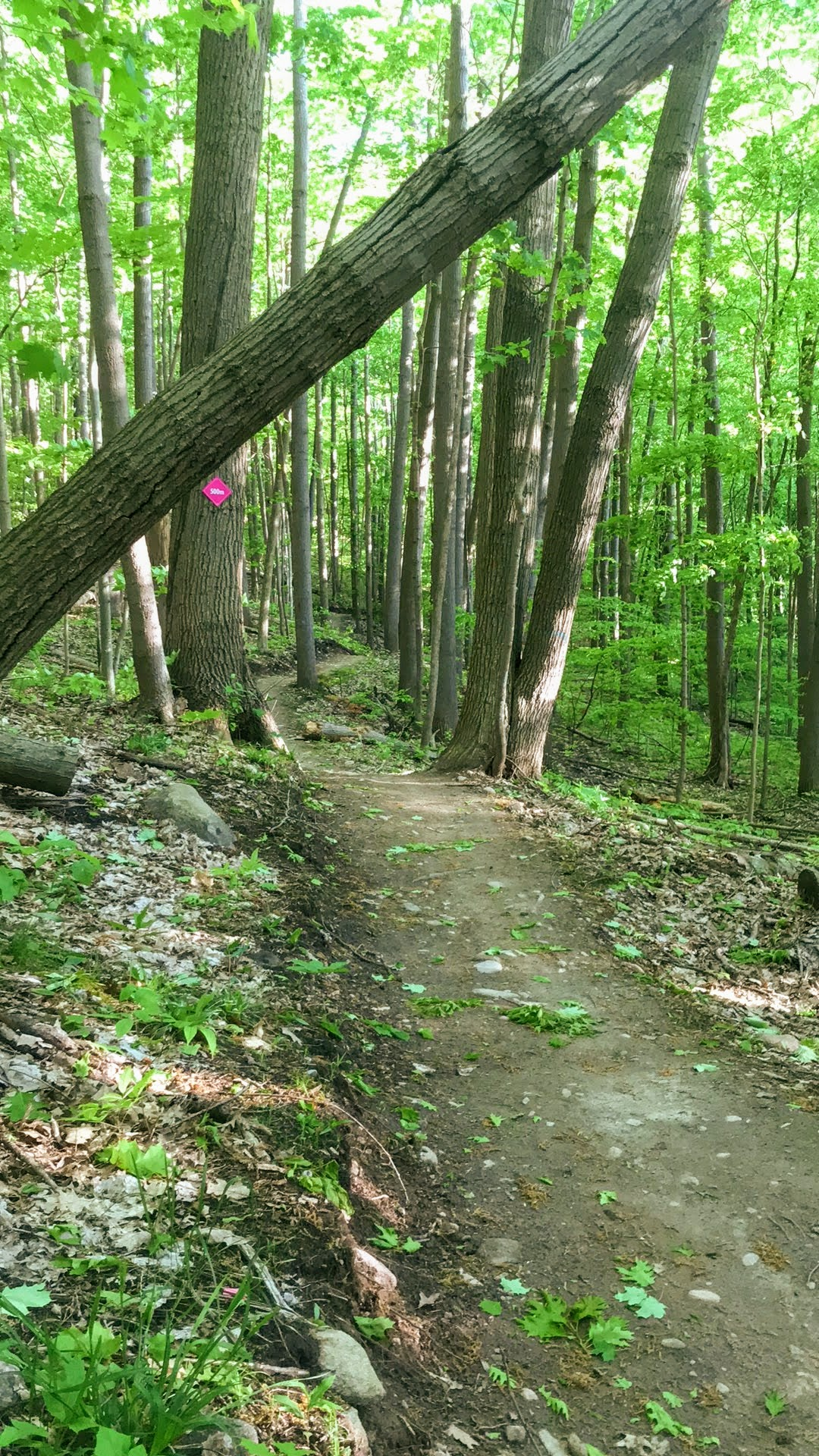 Mountain biking trails at Batawa