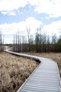 The winding path of the marsh boardwalk at Presqu'ile Provincial Park.