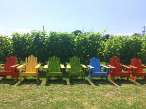 Colourful Muskoka Chairs lined up