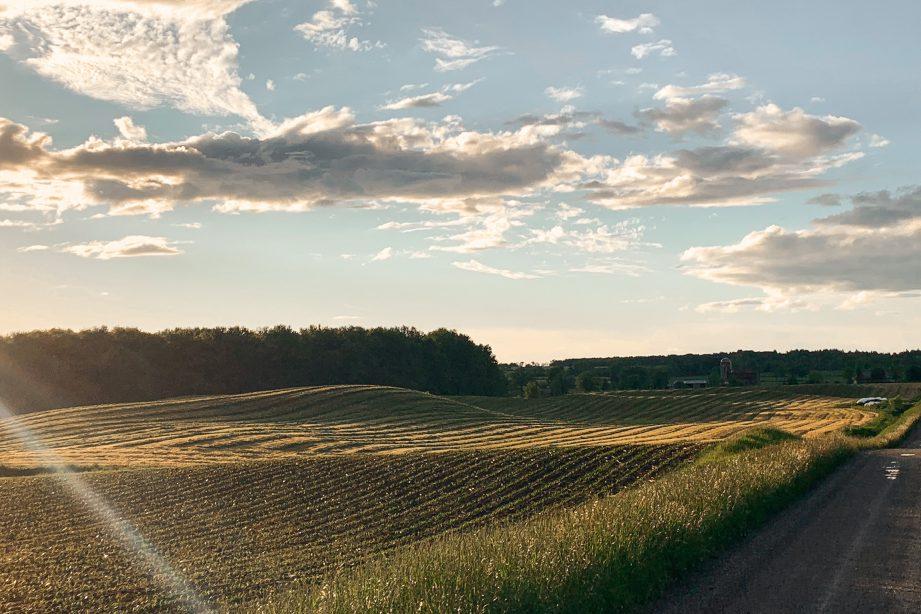 A farmer's field at sunset.