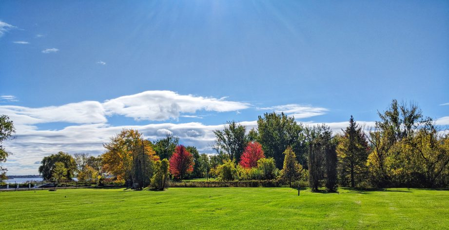 A photo of trees in the fall. With so much to see, eat, explore and do, it's hard to know where to begin! Check out our weekly ideas for things you Must Do in BoQ.
