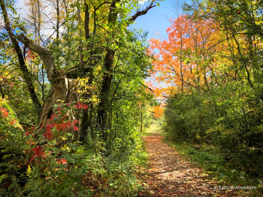 A trail in the woods during fall. Check out this family-friendly list of fall hikes in the Bay of Quinte by Kathryn Dickson of Kathryn Anywhere.