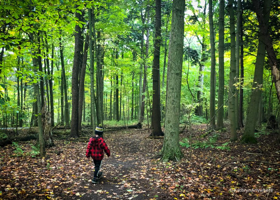 A child wearing a red jacket walking on a trail in the woods.
