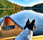 A dog sitting in a canoe on a river. Find out what it's like heading out for a fall paddling adventure on the Might Moira River north of Belleville!