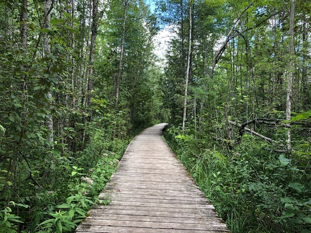 A boardwalk trail lined with trees.